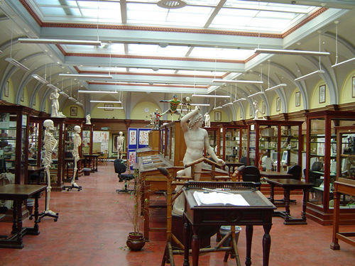 Anatomy Museum The Medical School University Of